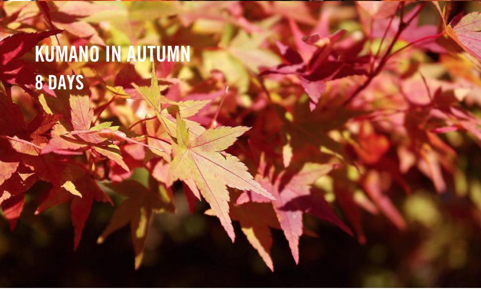 Kumano_kodo_ autumn